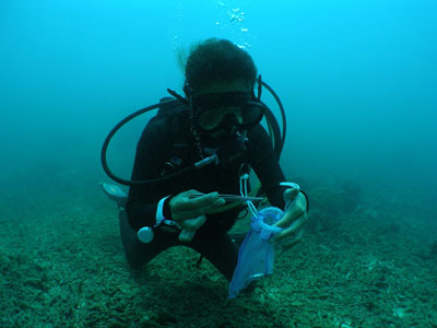 サンゴ植え付け