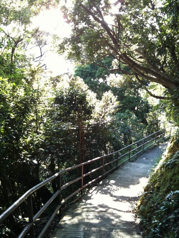 中の島遊歩道4