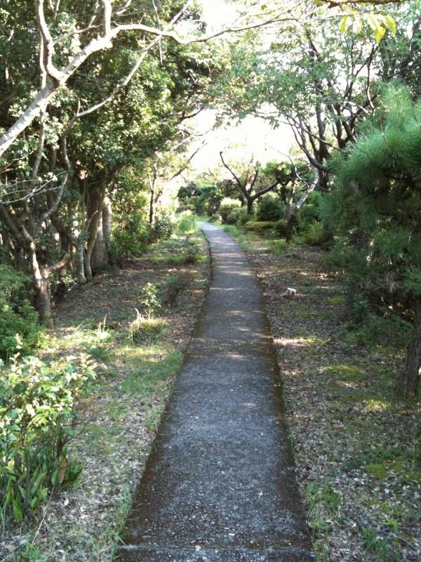 中の島遊歩道5