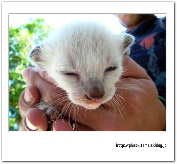 猫の赤ちゃん13日目
