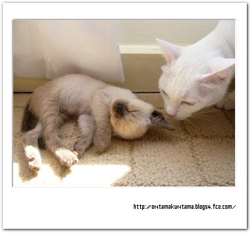 cat09021201