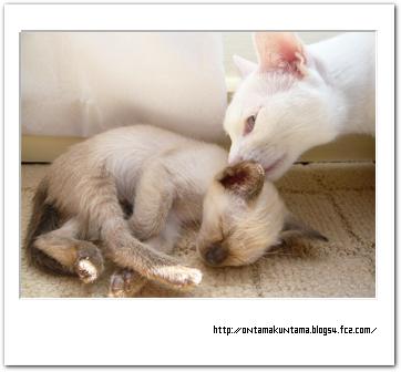 cat09021202