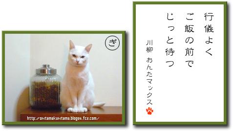 猫川柳086