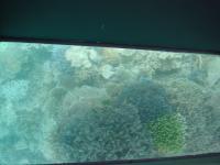 青いさんご礁.からさんごを覗く