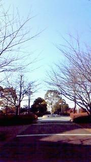 1月14日 散歩道