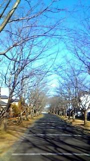 1月20日 遊歩道