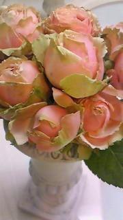 3月28日 薔薇1