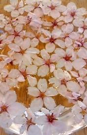 4月12日 桜りか