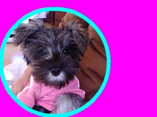 snap_otomezapeach_200910164019.jpg