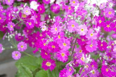 20110430-flower02.jpg
