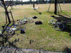 cycle14.jpg