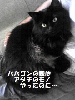 1_20101011154047.jpg