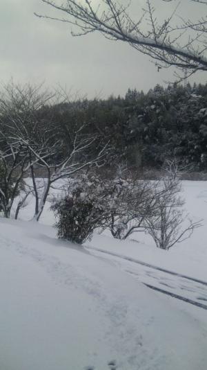 20110116_01.jpg