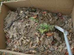 ダン箱堆肥-最終状況