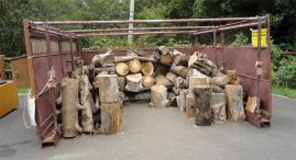 補充された流木置き場