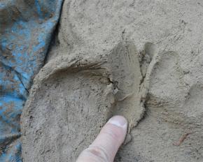 粘土の具合アップ