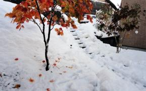 紅葉と新雪