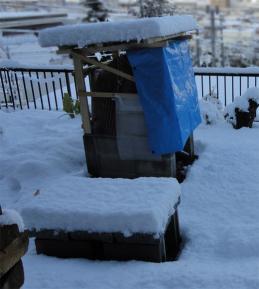初雪で窯もすっぽり