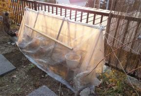 鉢植えの簡易冬囲い