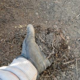堆肥の仕上がり具合