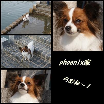 phoenix家