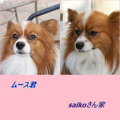 saikoさん