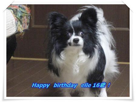 エル16歳!