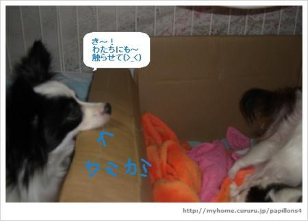9_20100207142638.jpg