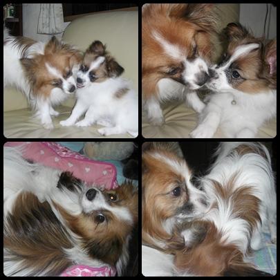 cats2_20091224130417.jpg