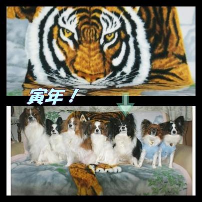 cats_20091231202014.jpg