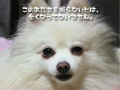 090904_04.jpg
