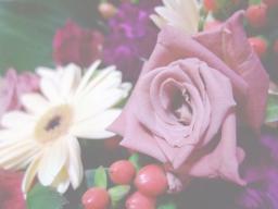 0903flower3_soft.jpg