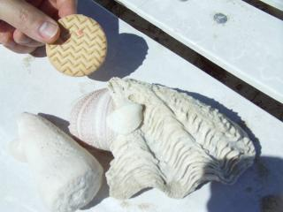 テニア島の貝殻