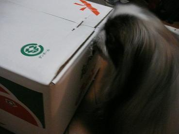 2008.12.17