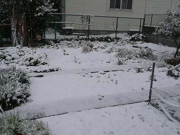 2011.2.11