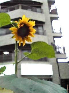 Image469.jpg