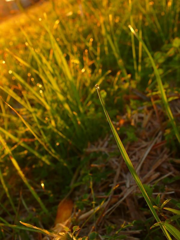草・景・季・寄 -2008 初冬-