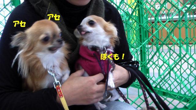 Image149.jpg