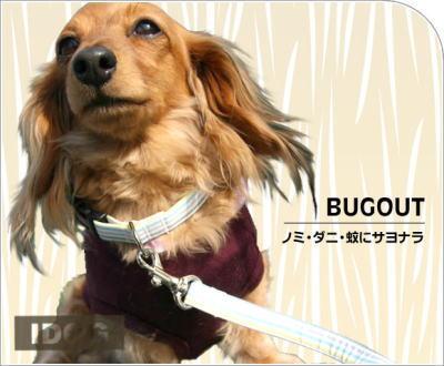 bugout2.jpg
