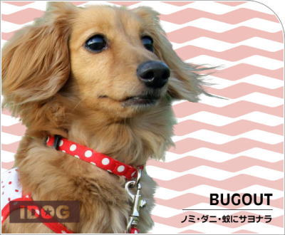 bugout4.jpg