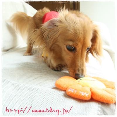 hotdog5.jpg