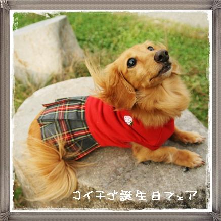 kochigo1.jpg