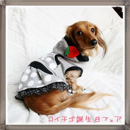 koichigo6.jpg