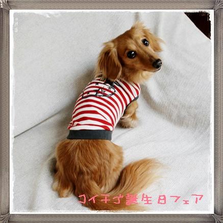 koichigo7.jpg