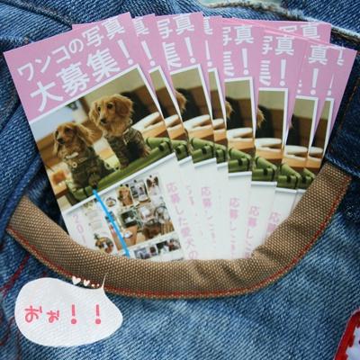 shiori1.jpg
