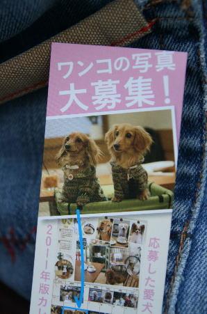 shiori2.jpg
