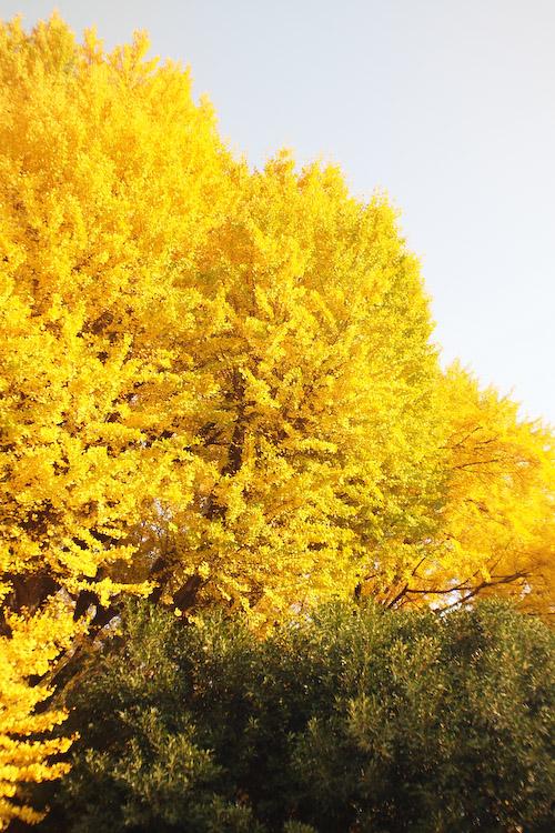 新宿の紅葉