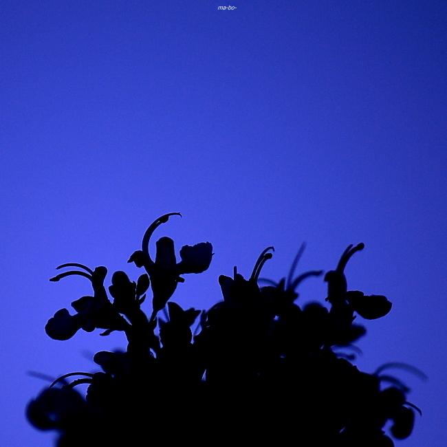 月夜のうさぎ