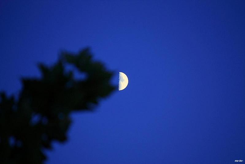 月にチュー