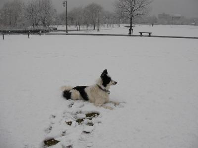 雪の中のビアンカ